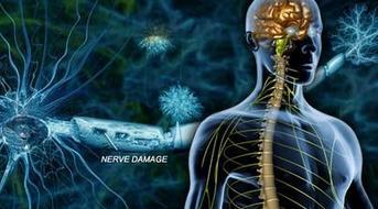 超低频生物电磁导入技术六大系统评估