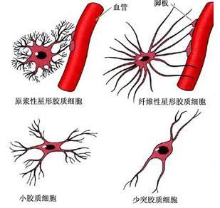 超低频生物电磁导入技术 -八大系统检查