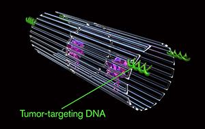 中美科学家联手,用DNA纳米机器人杀死癌细胞